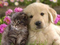 Very cute cat and dog together.